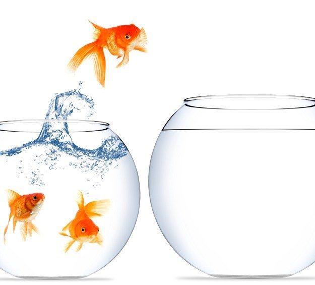 Fish zone de confort