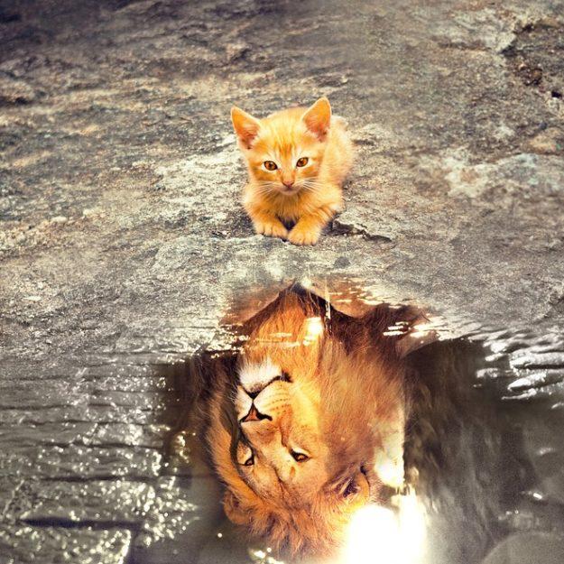 cat-3809563_960_720